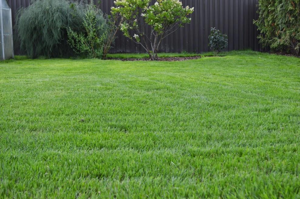 Zālienu ierīkošana, atjaunošana, pļaušana un kopšana