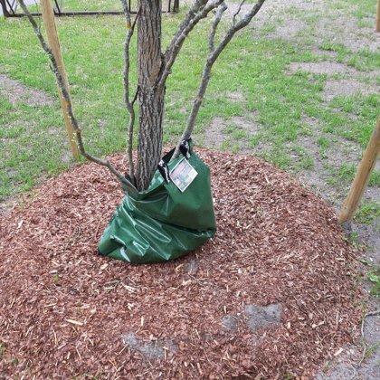 Посадка деревьев и кустарника - koku un krūmu stādīšana