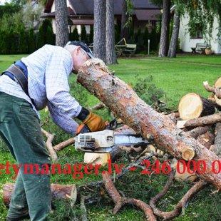 Вырубка деревьев и подрезка веток