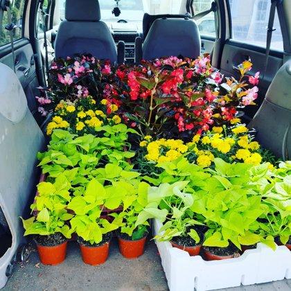 Посадка цветов и новые клумбы