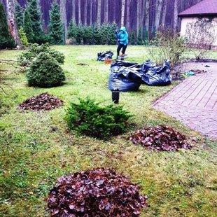 Осенняя уборка сада в Юрмале
